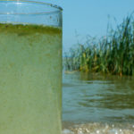 Drinking Glass filled with algae water