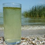 Glass of water filled with algae from Lake Erie