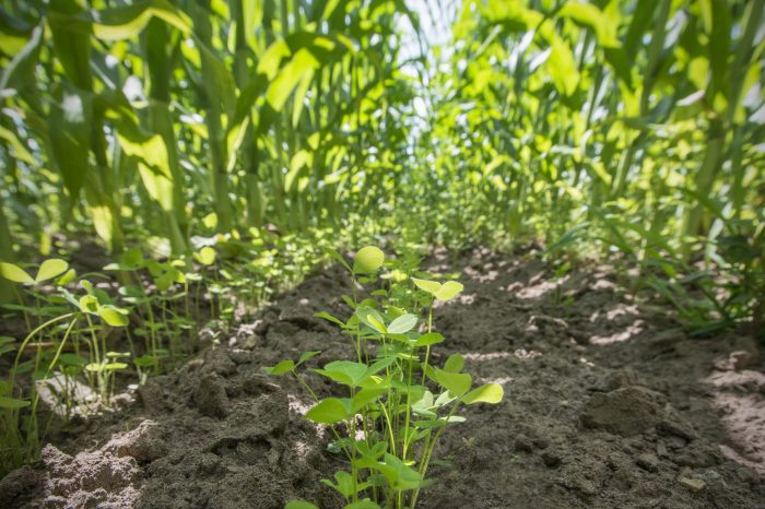 Cover crops help stop runoff pollution