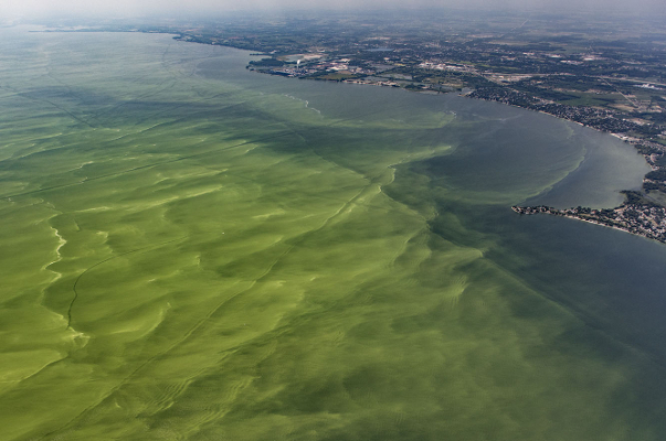 Aerial photo of Lake Erie Algal Bloom by Aerial Associates Photography